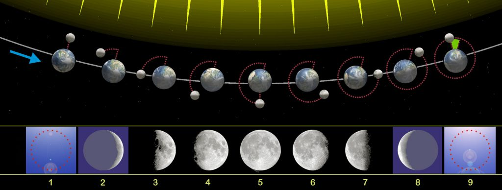 Fases y órbita de la Luna